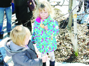 Part of the festivities included taking chunks of toast, soaking them in cider and sticking them on branches in the orchard. That's what Caroline Chambers, 2, of Caledon and her sister Alyssa, 4, were busy doing.