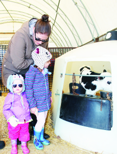 Sara Dow of Tottenham was showing her daughters Addison, 4, and Savannah, 20 months, this new Holstein calf.