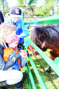 The petting zoo attracted lots of attention. Stephanie Albanese of Orangeville helped her son Matteo, 2, feed the animals as her nephew Ethan, 11, watched.